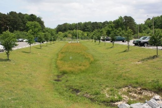 Grassy Drainage Area