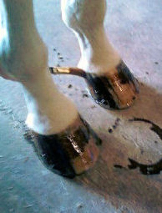6 - Inside of left hoof from right side