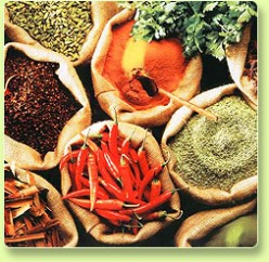What is the difference between an herb and a spice?