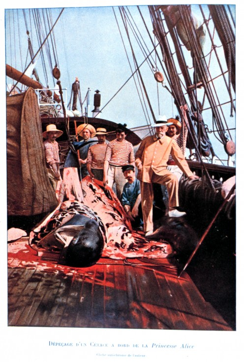 "Prince Albert and crew posing on the deck of the PRINCESS ALICE with a dissected cetacean, 1897, ""From the Surface to the Bottom of the Sea"" by H. Bouree, 1912."