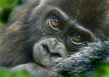 Wildlife volunteer projects