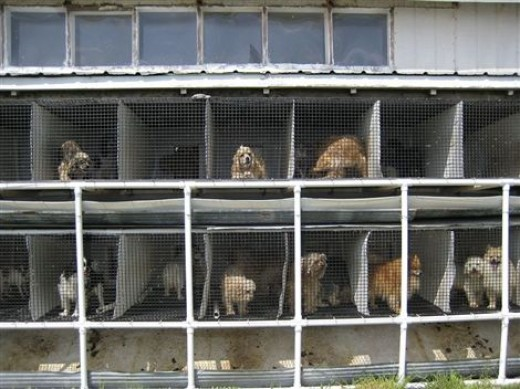 This is what a Puppy Mill can look like.