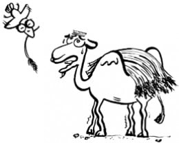 Poor camel. Here comes the straw that will literally break his back!