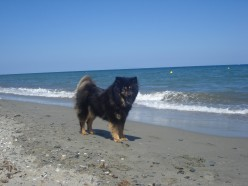 Vacation with our dog Benda in Moriani Beach, Corsica