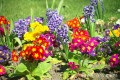Tips for Maintaining Healthy Lush Gardens at Home