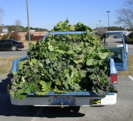 Selling collards from his farm