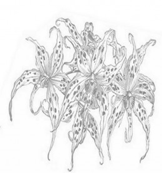 Floral Arrangement Coloring Pages and Free Colouring Pictures to Print