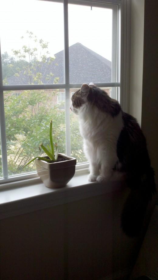Hunter watching the birds