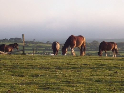 This was taken at 9.30pm today (25th June) - horses grazing in the fields behind the house on a lovely summer's eve