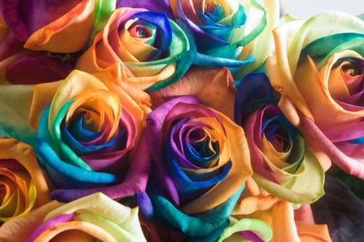 Rainbow Roses is Happy Roses, the superb choice of flower gift for special moment.