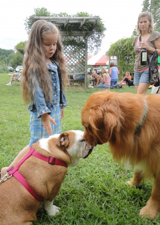 Image of Ruby, an English Bulldog, owned by Chrissy Senft of York, Pa., and Mackey, a Golden Retriever, owned by Jared Moore of Mechanicsburg, Pa.  The two dogs are making friends while 5-year-old Brooke Geier of Lancaster, Pa., joins in on the fun.