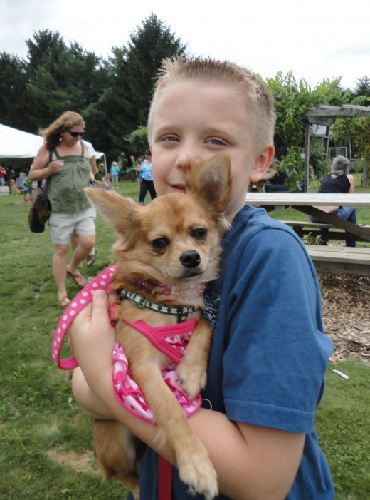 Image of 8-year-old Hunter Buffington of Fairfield, Pa., holding his puppy, Bentley, a long-haired Chihuahua.
