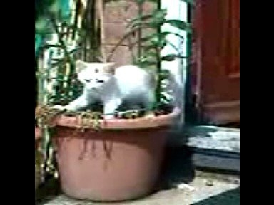 checking out my first plant pot