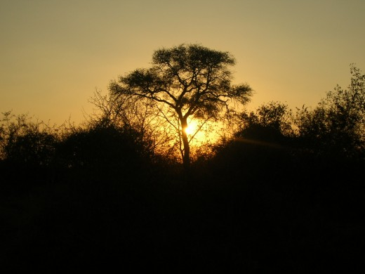 A shot I took at sunset in Kruger Park, South Africa
