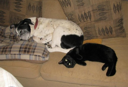 Rio is a nice old fellow and even allows our new housemate, Pepper, to sleep with him.