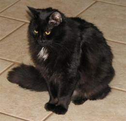 Star Noir is a pretty girl. My human said I was smitten with her in my younger days.