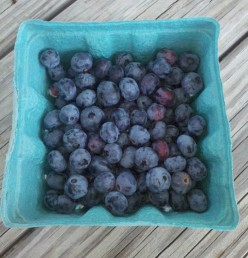 Not So Lazy Days: Pick blueberries at the local farm