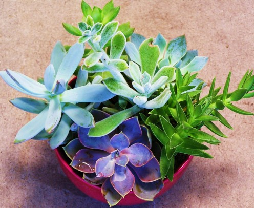 Succulent Dish Garden ~ Mixing Color and Leaf Forms.