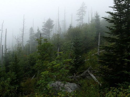 At Clingman's Dome.