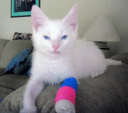 Image of Caspurr on the road to recovery