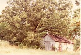 Dad's workshop under the big Oak tree.