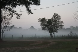 Just a pic of morning fog.