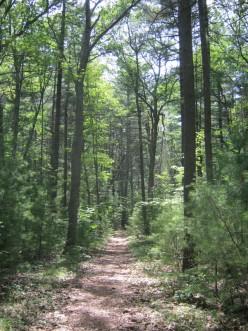 Hiking Noanet Woods - Dover, Massachusetts