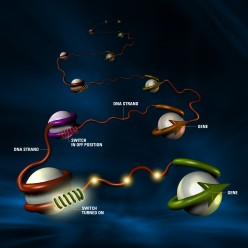 Discovering DNA Packaging into the Nucleosome