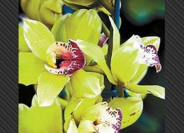 Rare new orchid from luxuo.com