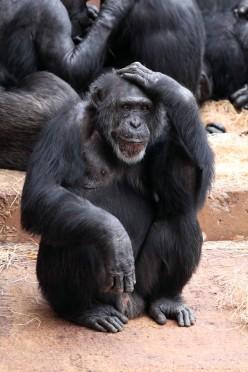 drunkin monkey hangover