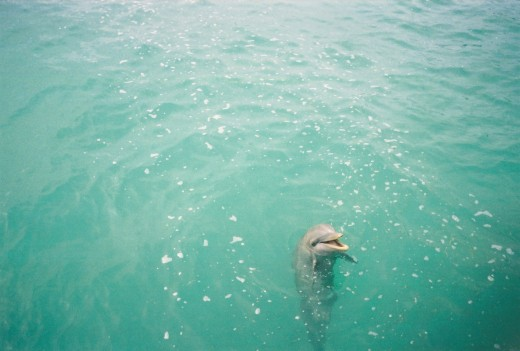 Swim with the Dolphins in Cancun Mexico