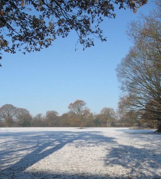 Snow Scene - Copyright Tricia Mason