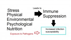Endurance Exercise Stress and Immunosupression Response