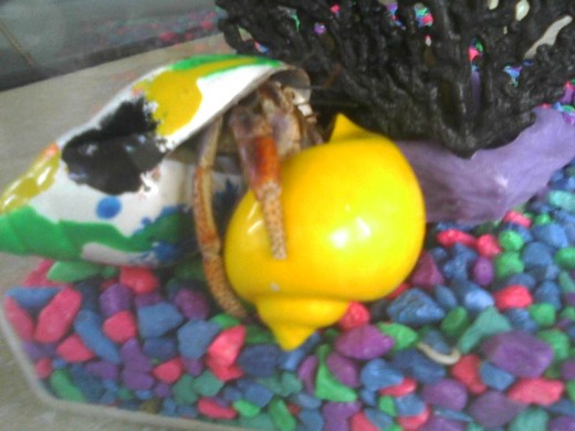 Mr. C seems unsure which shell he prefers.