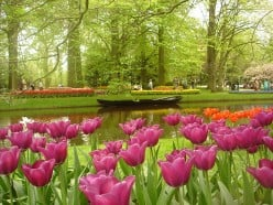 Top Five Countries With Beautiful Flowers