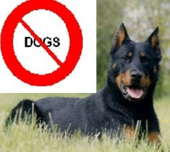 Dog Phobia? The Question of Keeping Dogs in Islam