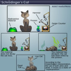 Americans the New Schrödinger's Cats