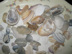 A display of shells and beach stones