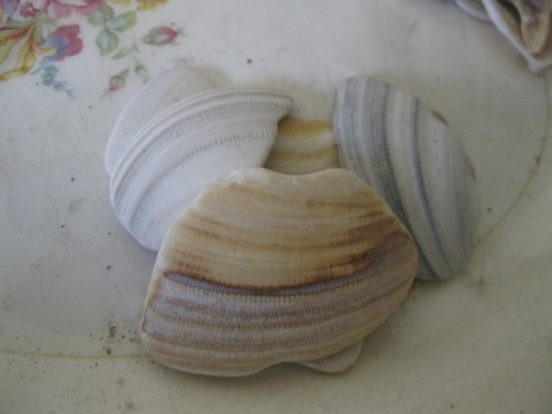 Colorful stripes adorn the outside of these shells