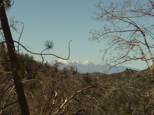 Photographing trees in front of the view of Mount Baldy.  The textures make this composition more visually appealing.