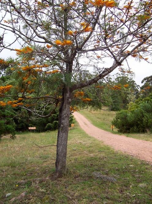 Arboretum Lussich, near Punta Ballena, Maldonado Department, Uruguay.