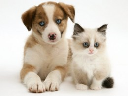 Puppies and kittens are adorable, but they are much more work than you think, especially if you are unprepared!