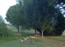 I love being able to see the ducks when I''m walking.