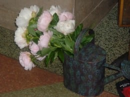 This time I placed a large group of light pink Peonies, cut rather long into a larger watering can. The color of the container is as important as the color of the flowers.