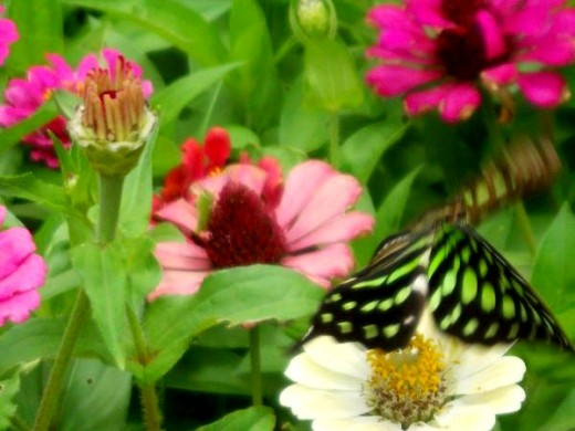 Green butterfly among flowers