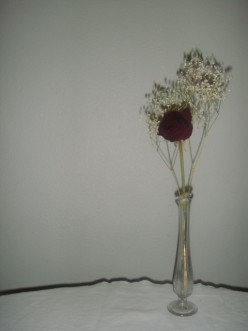 Lingering Rose ©