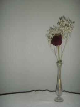 Dried rose in vase