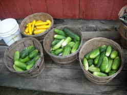 There are an abundance of summer squash . . .  in the summer!!