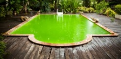 Can Biofuels From Algae or Garbage Solve Our Energy Problems