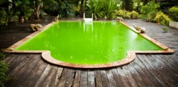 Can Biofuels From Algae or Garbage Solve Our Energy Problems?